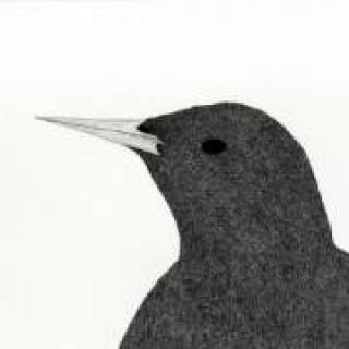 Lata - Starlings